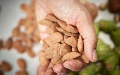Notre ingrédient gourmand et healthy fétiche : l'amande !